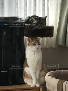 窓の前に座っている猫の写真・画像素材[721365]