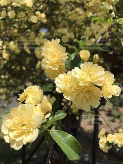 近くの花のアップの写真・画像素材[721708]