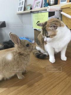 ねことウサギの写真・画像素材[2581430]