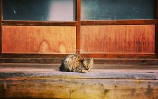 ベンチに座って猫の写真・画像素材[721845]
