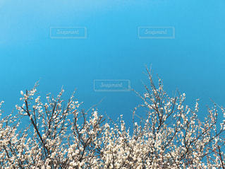 近くの木のアップの写真・画像素材[721846]