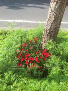 庭の植物 - No.722188