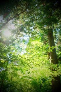 55.大きな森の木の下での写真・画像素材[723624]
