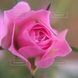 近くの花のアップの写真・画像素材[724316]