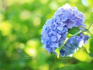 花の写真・画像素材[60093]