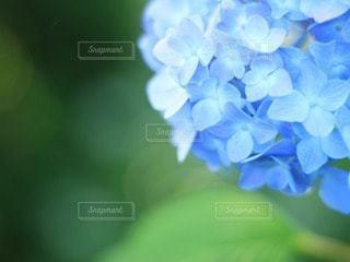 花の写真・画像素材[60094]