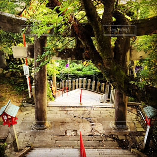 福岡市愛宕神社の写真・画像素材[729122]