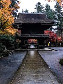 平林寺の紅葉の写真・画像素材[813601]