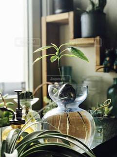 テーブルの上の花の花瓶の写真・画像素材[722937]