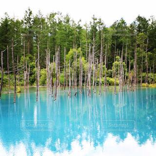木々 に囲まれ青のたたずまい。の写真・画像素材[723779]