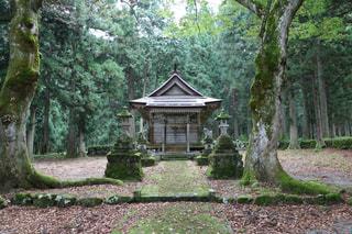 神秘的な神社。の写真・画像素材[803589]