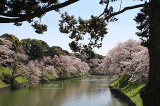 皇居のお堀と桜。の写真・画像素材[1099626]