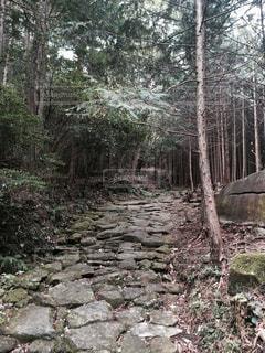 熊野古道を行く!の写真・画像素材[1775925]