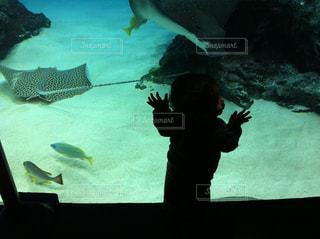 水族館を楽しむ子供の写真・画像素材[723667]