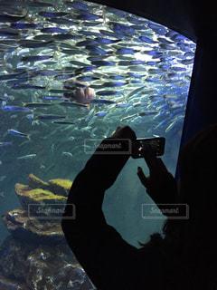 水を見ている男の写真・画像素材[744502]