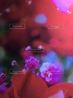 花のぼやけた画像の写真・画像素材[750384]