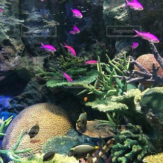 紫の花のグループの写真・画像素材[775512]