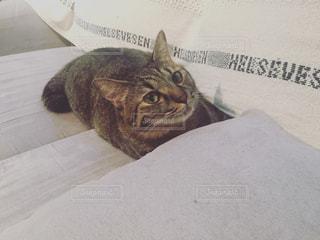 懸賞応募ハガキを書く私を見守ってくれる愛猫 - No.730718
