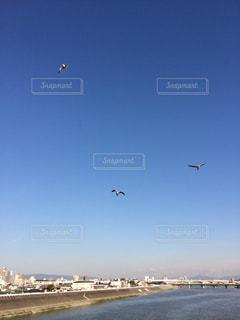 空に凧の飛行の人々 のグループの写真・画像素材[727245]