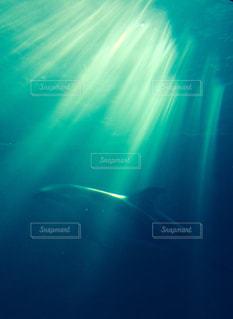 水面下を泳ぐイルカ - No.730722