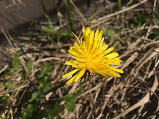 花の写真・画像素材[831211]