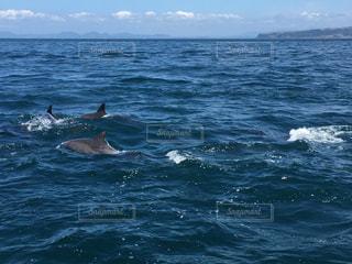 イルカの群れの写真・画像素材[725293]