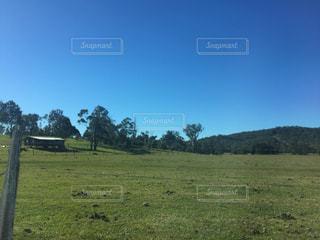 背景の木と大規模なグリーン フィールドの写真・画像素材[725308]