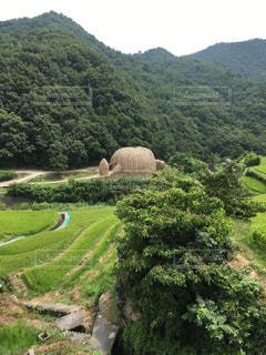 小豆島の棚田の写真・画像素材[728800]