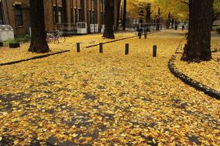 秋、落ち葉のじゅうたんの写真・画像素材[726216]