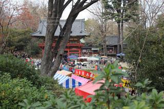 根津神社のつつじ祭りの写真・画像素材[726241]