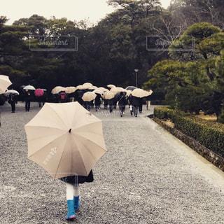 傘と雨の中歩く人々 のグループ 伊勢神宮の写真・画像素材[1565507]