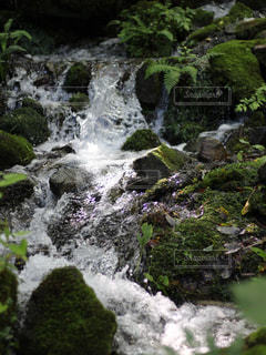 川の流れの写真・画像素材[833594]