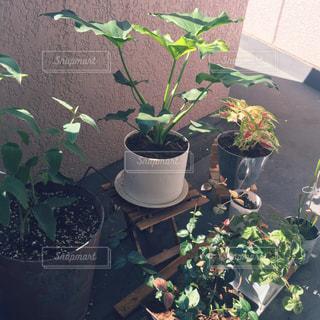 庭の植物の写真・画像素材[725933]