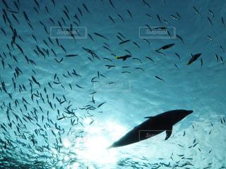 空を飛ぶイルカの写真・画像素材[817774]
