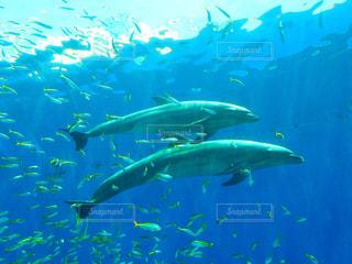 イルカの写真・画像素材[818269]