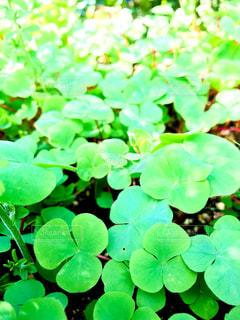 可愛い植物達💕 - No.862941