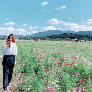 コスモス畑を散歩の写真・画像素材[1526490]