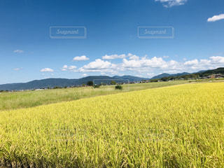 田舎の風景の写真・画像素材[1538334]