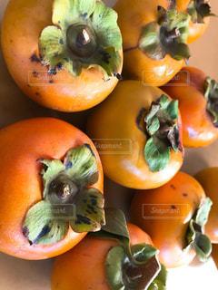 もぎたての柿の写真・画像素材[1559521]