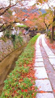 秋の哲学の道の写真・画像素材[1627615]