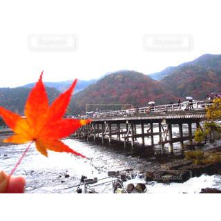 嵐山の紅葉の写真・画像素材[1661110]