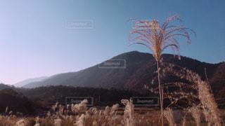 琵琶湖ぐるり一周の写真・画像素材[1699825]