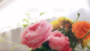 バーズデープレゼントの写真・画像素材[2393936]