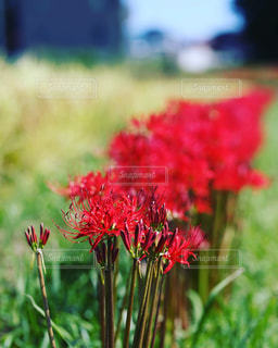近くの花のアップ - No.781900