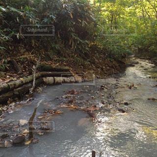 森を流れる川の写真・画像素材[726523]