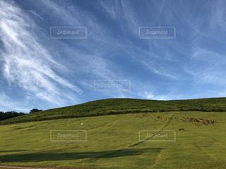 若草山に鹿の群れの写真・画像素材[1879942]