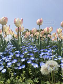 お花の合唱の写真・画像素材[2058278]
