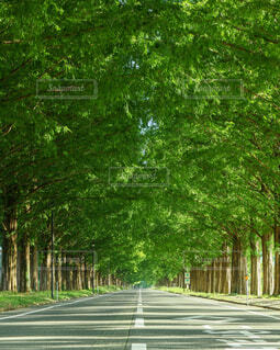 ずっと続く並木道の写真・画像素材[4370024]