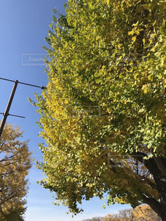 近くの木のアップの写真・画像素材[924923]