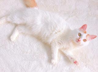 地面に横になっているオレンジと白猫 - No.726821
